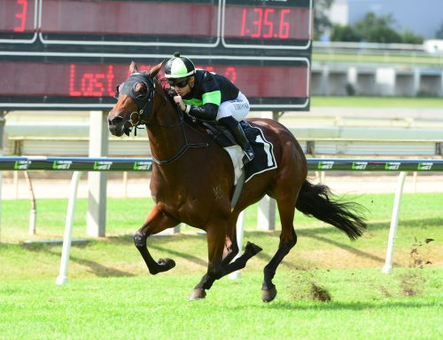 Candika Another Proven Success For Walter & Kia Ora Stud